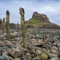 20150321 001 Lindisfarne Castle (Wm)