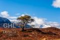 20130406 001 Lonely Scots Pine (Wm)