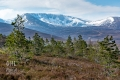 20170501 004 Cairngorms (Wm)