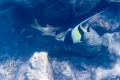 20170405 002 Marine Snorkling (Wm)