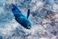 20170405 003 Marine Snorkling (Wm)