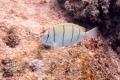 20170405 004 Marine Snorkling (Wm)