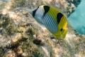 20170405 005 Marine Snorkling (Wm)