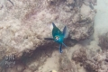 20170405 006 Marine Snorkling (Wm)