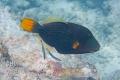 20170405 007 Marine Snorkling (Wm)
