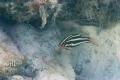 20170408 004 Marine Snorkling (Wm)
