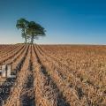 20120923 001 Tree Lines (Wm)