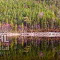 20130405 001 Forrest Reflections (Wm)