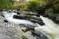 20061105 001 River Feshie (Wm)