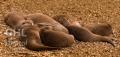 20060813 001 Otter Family (Wm)