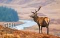 20071229 001 Glen Etive Deer (Wm)