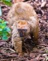 20080425 001 Lemur (Wm)