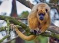 20080813 001 Monkey (Wm)