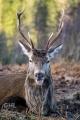 20150103 002 Glen Etive Deer (Wm)