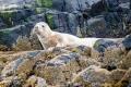20150613 001 Grey Seal (Wm)